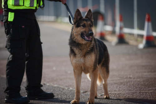 Security dog handler Training